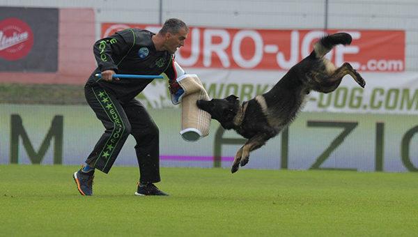 สถาบันฝึกสุนัขที่ได้รับความนิยม