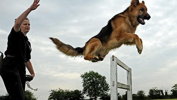 สร้างระเบียบวินัยให้สุนัขด้วยการฝึกสอน