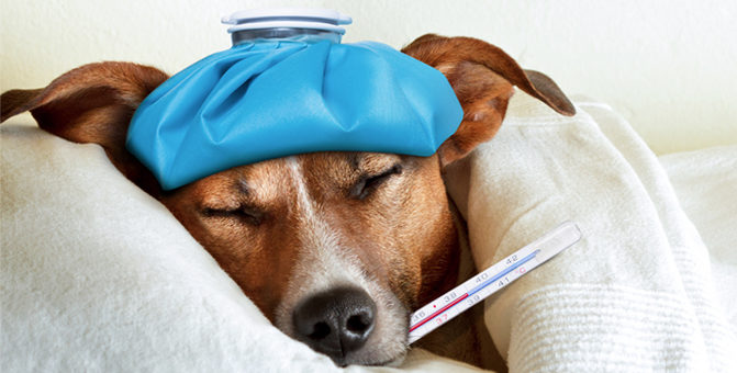 รู้ทัน โรคกระเพาะบิด อันตรายไกล้ตัวสำหรับสุนัข