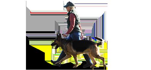 ฝึกสุนัขให้เดินตาม