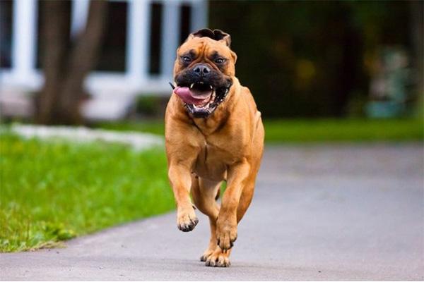 เพื่อนที่แสนดีของมนุษย์สุดยอดสุนัขเฝ้าบ้าน