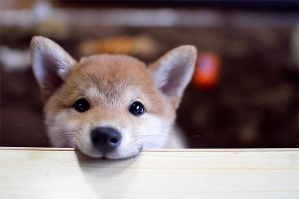 เพื่อนที่แสนดีของมนุษย์สายพันธุ์สุนัขที่ฉลาดที่สุดในโลก