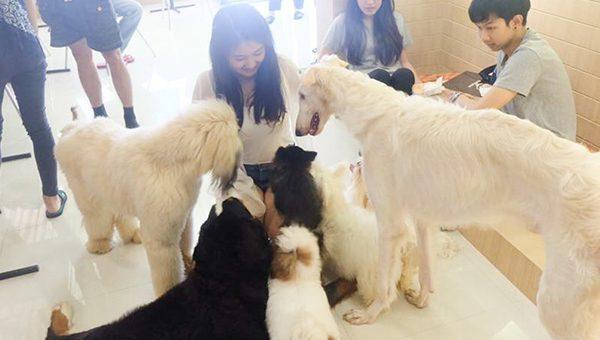 แนะนำสุนัขที่เข้ากับบรรยากาศของเมืองไทย