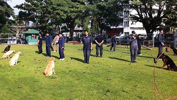 แนะนำสถานที่ฝึกสุนัขในประเทศไทย
